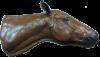 Equine Vascular Access Simulator