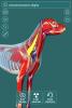 Visual Anatomy - Canine