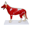 Small Dog Model