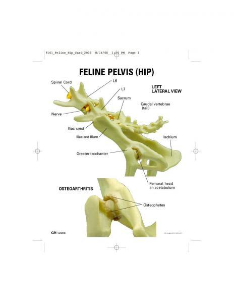 Hip pelvis anatomy