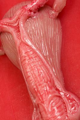 organ-seksa-foto